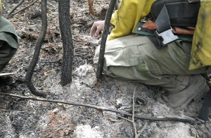 First Creek Fire soil burn severity testing