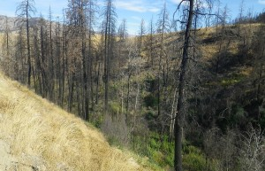 Black Canyon burn area
