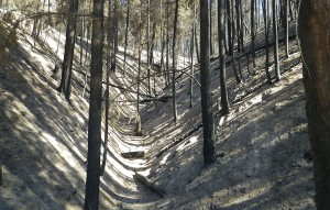 Burned gully in Black Canyon