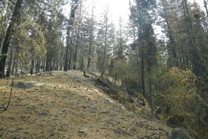 Low burn severity Black Canyon Fire